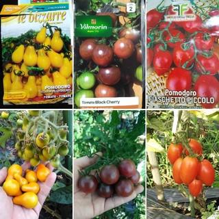 イタリア野菜の種 カラフルミニトマト3種類 10粒ずつ(野菜)