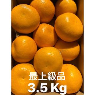 愛媛 最上級品 宇和ゴールド紅 3.5Kg   美生柑 河内晩柑 みかん(フルーツ)