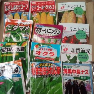 女性にオススメ 美髪、美肌😊春まきの野菜の種 5種類セット 小分け(野菜)