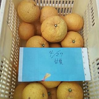 甘夏10キロ広島県産無農薬。(フルーツ)