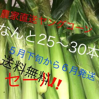 セールヤングコーン値下げ今だけ6月発送予定品‼️(野菜)