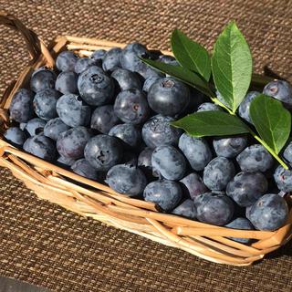 【メルカリ便】朝摘み中粒ブルーベリー(生食用)600g (フルーツ)
