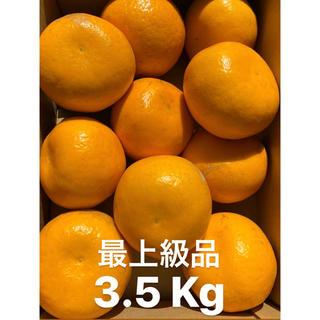 愛媛 最上級品 宇和ゴールド紅 3.5Kg   美生柑 河内晩柑(フルーツ)