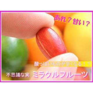 【お試し】ミラクルフルーツ(ドライ)1粒(フルーツ)