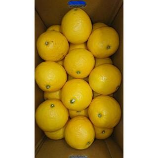 温室 小夏 3Lサイズ 5kg 高知県産 ご家庭用(フルーツ)