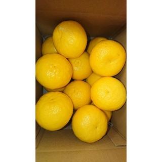 温室 小夏 Lサイズ 約2.5kg 高知県産 ご家庭用(フルーツ)