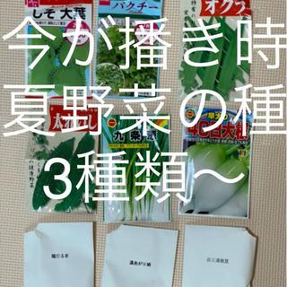 夏野菜の種 3種類〜(野菜)