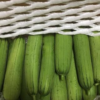 超お徳用 沖縄県産 EM栽培ハウスへちま 20kg (野菜)
