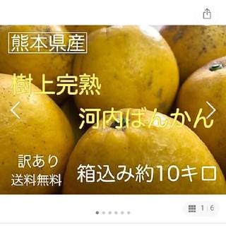 熊本県産 訳あり 和製グレープフルーツかわちばん10kg (フルーツ)