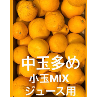 訳あり品 中玉多め 愛媛宇和ゴールド15Kg   美生柑 河内晩柑 ジュース用(フルーツ)