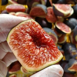ドライフルーツ黒イチジクビオレソリエス(フルーツ)