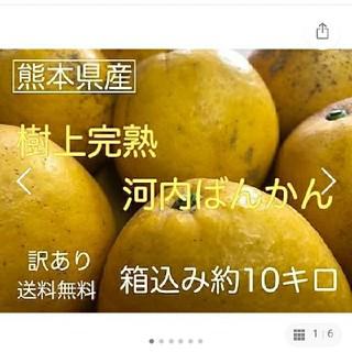 熊本県産訳あり和製グレープフルーツかわちばん10kg(フルーツ)
