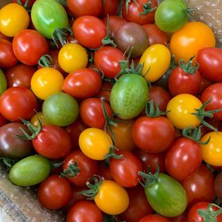 三須トマト農園<スペシャル宝石箱セット>  1.8kg (野菜)