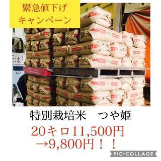 緊急値下げセール!!光り輝く大粒米✼宮城県産特別栽培つや姫20キロ(米/穀物)