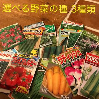 野菜の種 3種類(野菜)