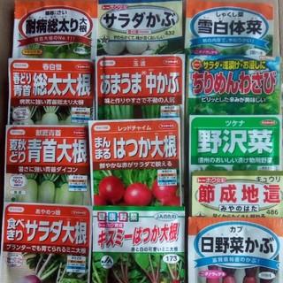 毎日、食べたい野菜 春、夏まきの野菜の種  5種類セット 小分け(野菜)