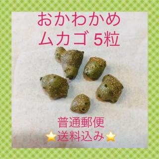 おかわかめ  雲南百薬 ムカゴ 5粒(野菜)