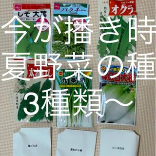 夏野菜の種セット 3種類〜(野菜)