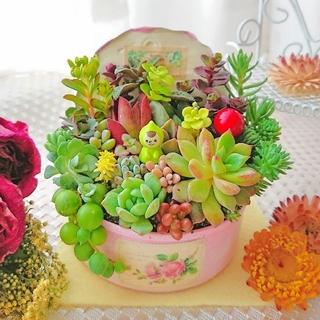 専用◆春の寄せ植え 小人の多肉の森 蓋つき ふんわりピンク×roseラベル(その他)