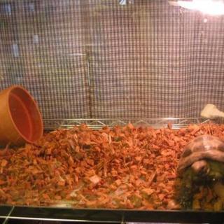 《送無》リクガメ等爬虫類の床材 ヤシガラ25L ココチップ 陸亀 ハスクチップ(爬虫類/両生類用品)