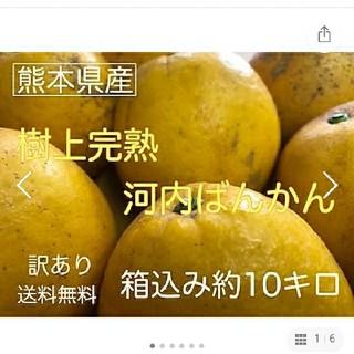 熊本県産 訳あり 和製グレープフルーツかわちばん10kg(フルーツ)