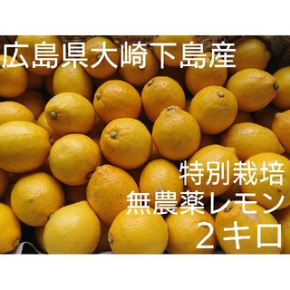 ミモザ様専用 無農薬!広島県大崎下島産 特別栽培レモン2キロ(フルーツ)