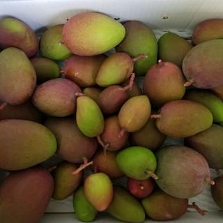 摘果マンゴー10キロ(野菜)