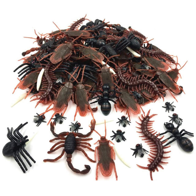 クモ ゴキブリ