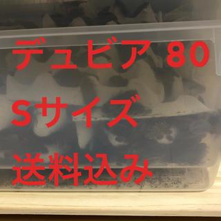 デュビア80 Sサイズ 送料込み(爬虫類/両生類用品)