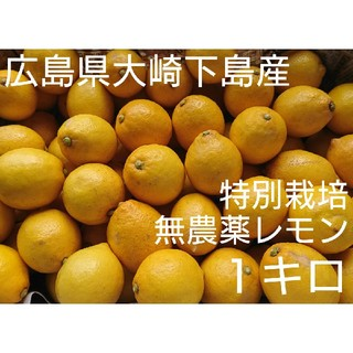 Ri☆☆様専用 無農薬!広島県大崎下島産 特別栽培レモン1キロ(フルーツ)