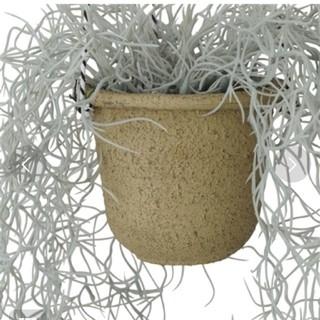 フランフラン(Francfranc)のFrancfranc 人工植物(インテリア雑貨)