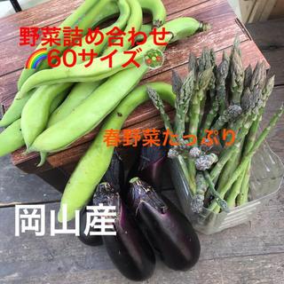 春野菜たっぷり🥗野菜詰め合わせ🌈60サイズ(野菜)