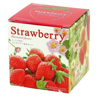 イチゴの栽培キット(その他)