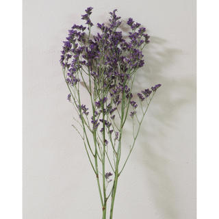 スターチス リモニューム 紫(ドライフラワー)