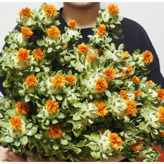 紅花 ベニバナ ドライフラワー (ドライフラワー)