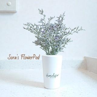 気分爽やか(*´︶`*)ドライフラワーアレンジメント(花瓶付きセット)(ドライフラワー)