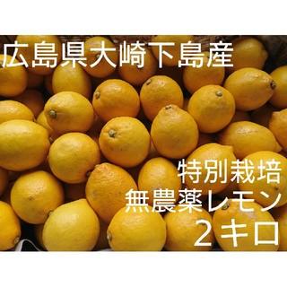 まる様専用  無農薬!広島県大崎下島産 特別栽培レモン 2キロ(フルーツ)