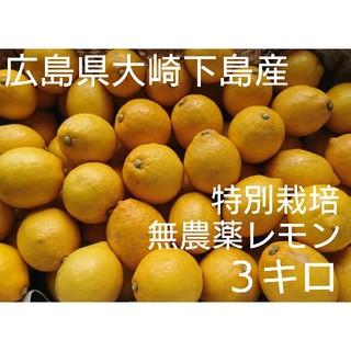 かな様専用 無農薬!広島県大崎下島産 特別栽培レモン3キロ(フルーツ)