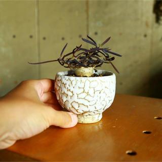 手捻り鉢(陶芸)