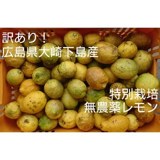 うち様専用 訳あり!広島県大崎下島産 特別栽培 無農薬レモン2キロ(フルーツ)
