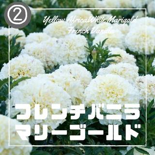 【マリーゴールド②】フレンチバニラ 種子30粒(その他)