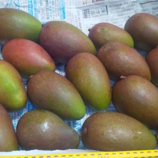 沖縄県産 摘果マンゴー 1キロ(フルーツ)