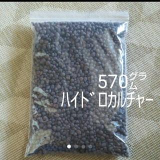 ハイドロカルチャー 570㌘ 1.2L 観葉植物(プランター)