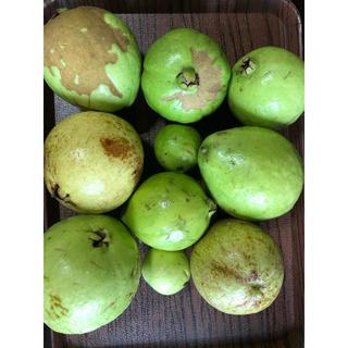 ③沖縄産 グァバ  1.3kg 大小サイズ 10個 白(フルーツ)