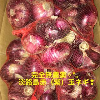 完全無農薬 淡路島・赤玉葱❣︎5㎏(野菜)
