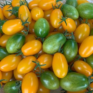 〈三須トマト農園〉プレミアムカクテルトマト1.8kg(野菜)