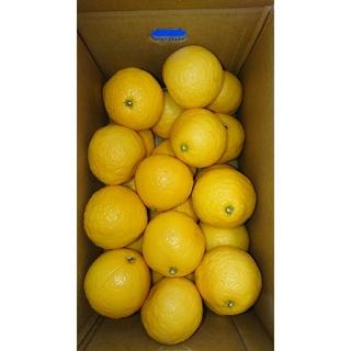 温室 小夏 2Lサイズ 5kg 高知県産 ご家庭用(フルーツ)