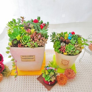 多肉植物 小人達の贅沢寄せ植え すぐ飾れるお得な3個セット◎ミニGARDEN◎(その他)