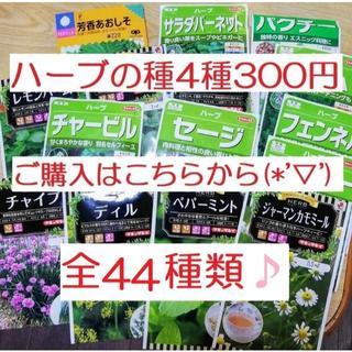 ⑳全44種類♪ ハーブの種 お好きな物 4種類 セット(その他)