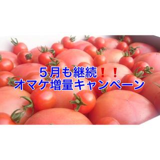 外出自粛応援❗️5月も継続❗️訳ありソムリエトマト5kg(18玉〜30玉)(野菜)